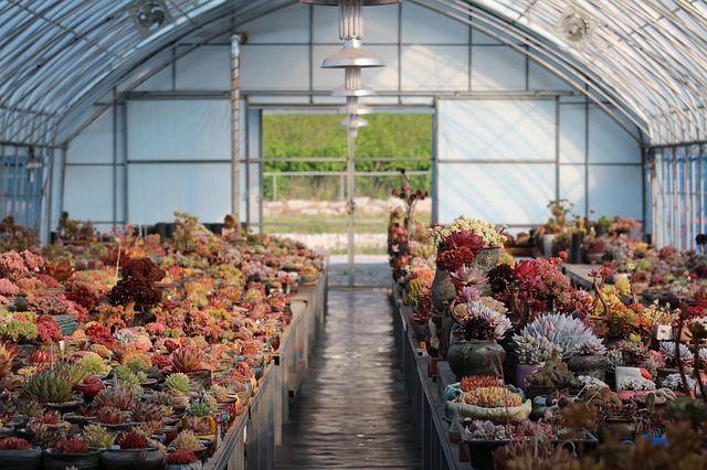 Jaką szklarnię ogrodową wybrać?